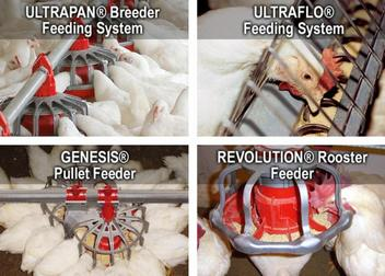 Breeder Feeders