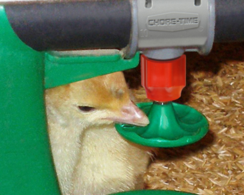 Pockets in the drinker's disc hold water to attract poults.