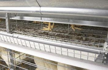 Composite Mesh Floor Improves Bird Safety and Promotes Egg Roll-Out