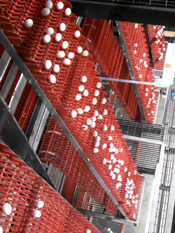 Chore-Time's EXCELSIOR® High-Capacity Collector  can collect eggs from up to 16 tiers at once.