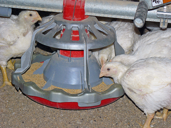 LIBERTY® Open-Grill Broiler Feeder (Patented)