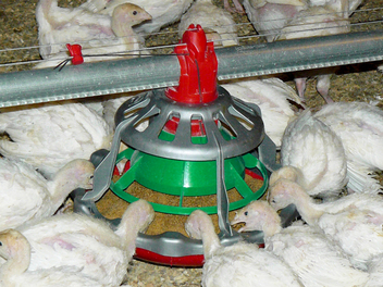 LIBERTY® Open-Grill Poult Feeder (Patented)