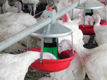 Chore-Time MODEL ATF™ PLUS Turkey Feeding System