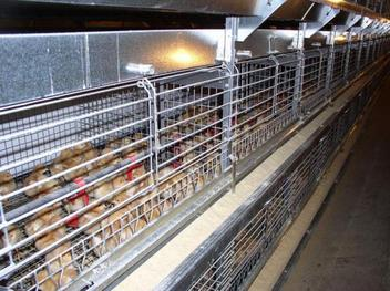 MMB™ Pullet Cages with Traveling Hopper Feeder