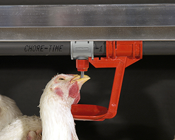 Chore-Time's breeder nipple has a shorter trigger pin and less lateral movement so both hens and roosters learn to drink directly under the nipple in a position that wastes less water. A breeder drinking system without catch cups is also available.