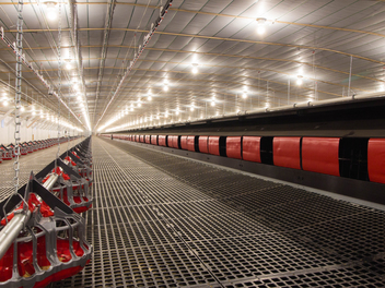 Chore-Time VALEGO Nest System with GENESIS® Layer Feeder