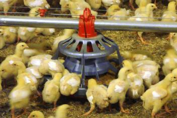 LIBERTY® Open-Grill Broiler Feeder