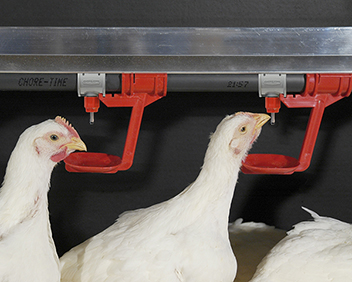 Chore-Time breeder watering systems are designed to encourage faster water consumption for quicker movement to nests and fewer floor and slat eggs.