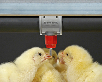 Chore-Time's broiler nipple is easy for birds to trigger from day one for optimum early feed conversion.