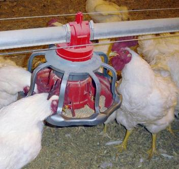 The REVOLUTION® Male Feeder gives producers the option of automatically filling feeders in the air or at floor level.